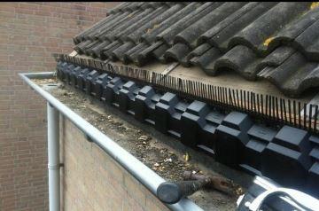 Mussen nestelen onder dakpannen